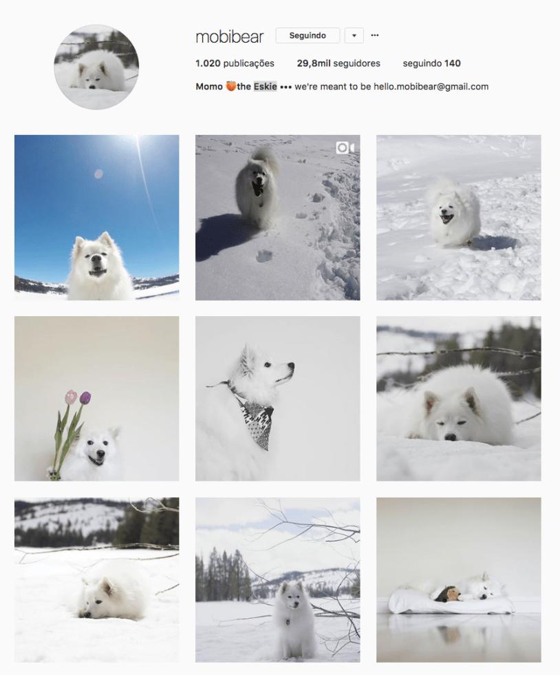 Cachorros para seguir no Instagram: mobibear. Por Delicia de Blog.