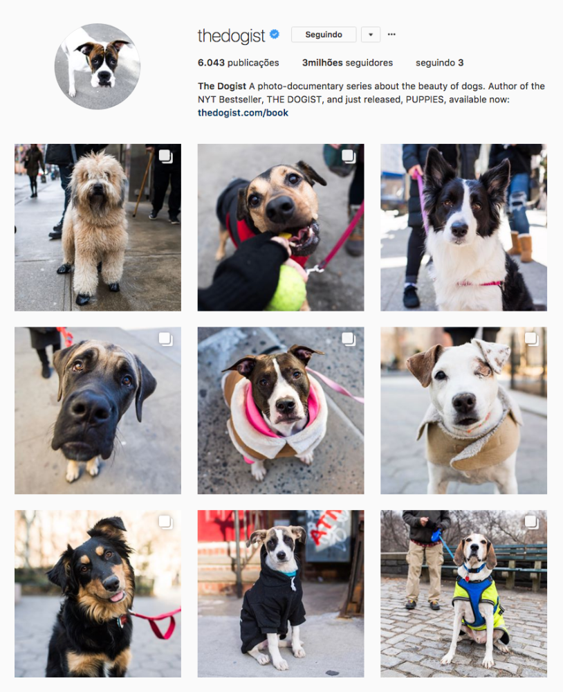 Cachorros para seguir no Instagram: The Dogist. Por Delicia de Blog.