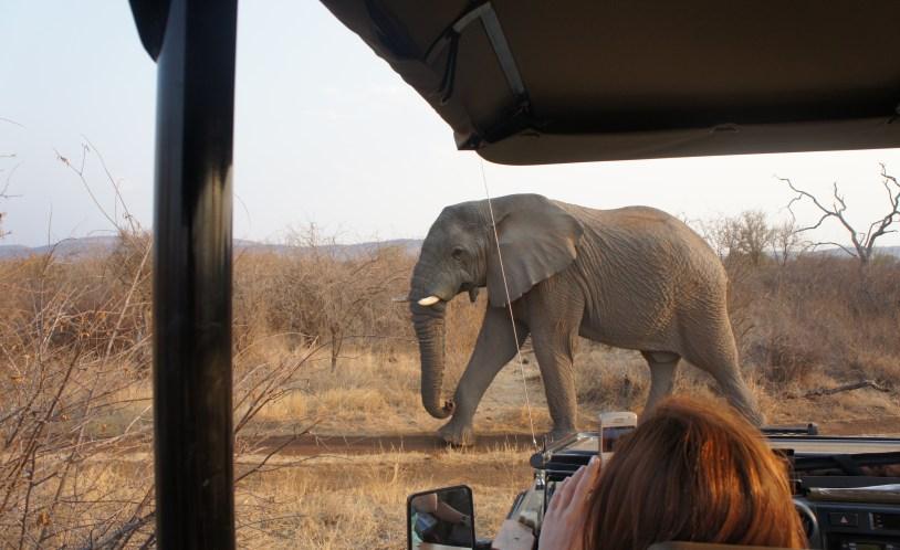 elefantes vistos no safari do Jacis Lodge
