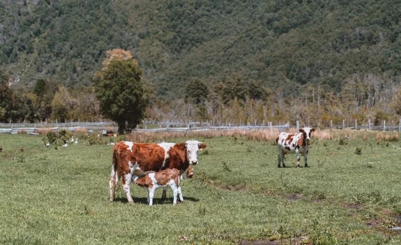 As fazendas fazem parte da paisagem em Llanada Grande, no Chile