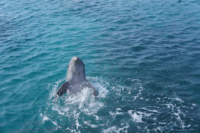 A terapia dos golfinhos