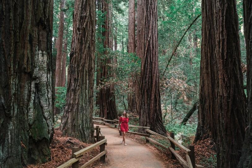 Raira Venturieri entre sequoias em Muir Woods, em San Francisco, na California