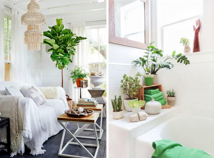 plantas1