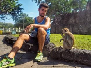Lop Buri, ville des singes - Délicieuse vie