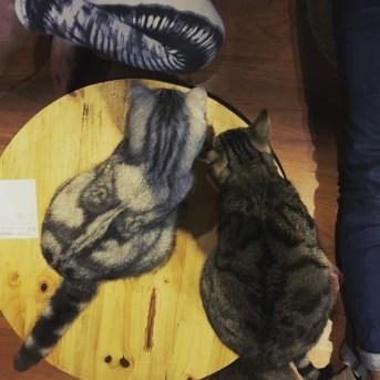 Meow Coffee Hanoi - Delicieuse vie