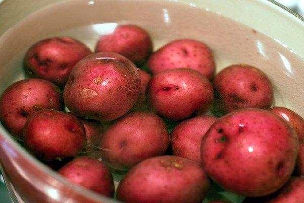 Boiling creamer potatoes.