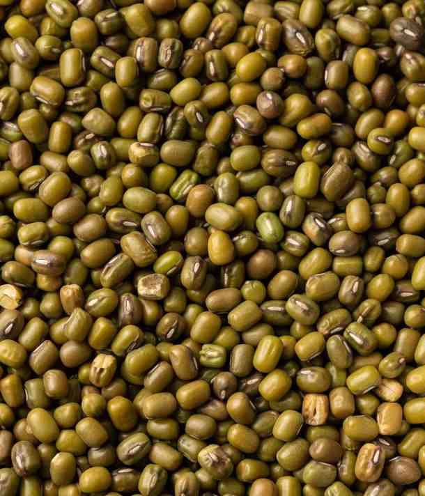 close up of Mung beans