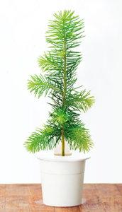 spruce11