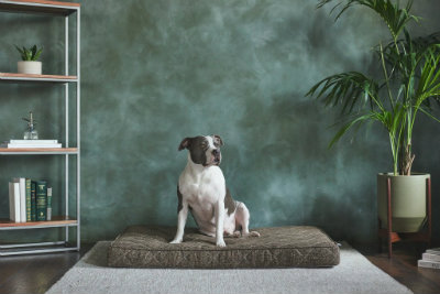 Brentwood Home Pet Bed U.S. Giveaway