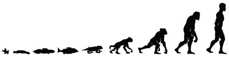 Эволюция от рыбы к человеку.