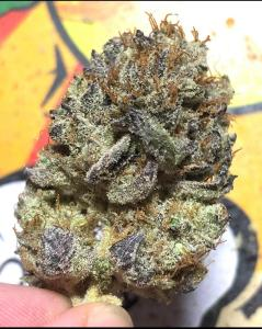 zaza weed strain, real zaza strain, zaza marijuana, zaza weed, what is zaza,