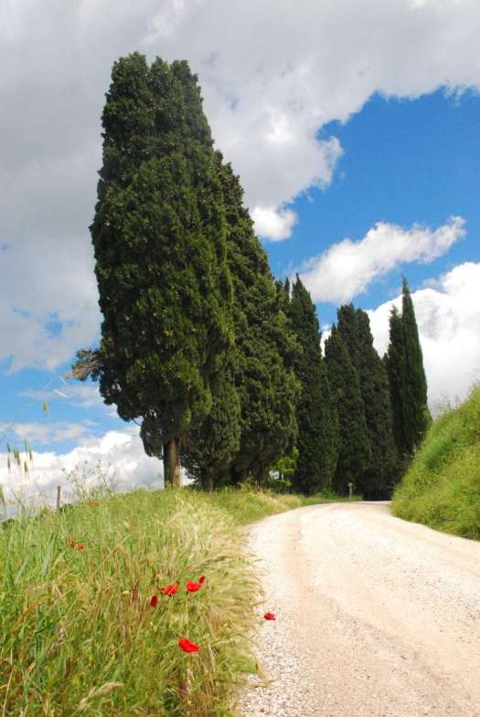 Val d'Orcia one day itinerary - cypress