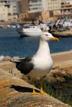 www.delightfullyitaly.com_Gallipoli_20