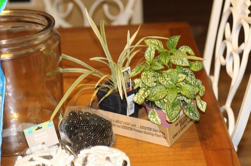 terrarium-plants