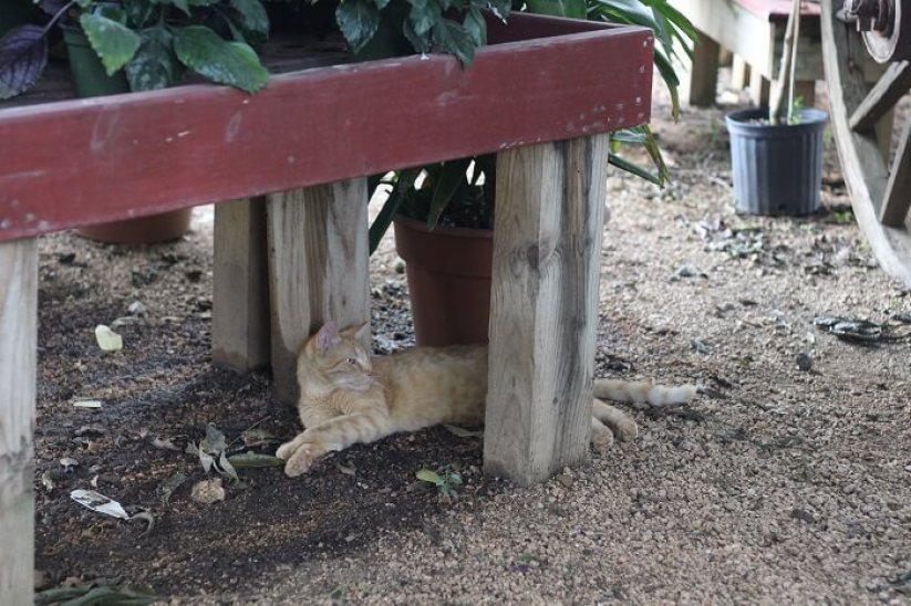 garden-feril-cat