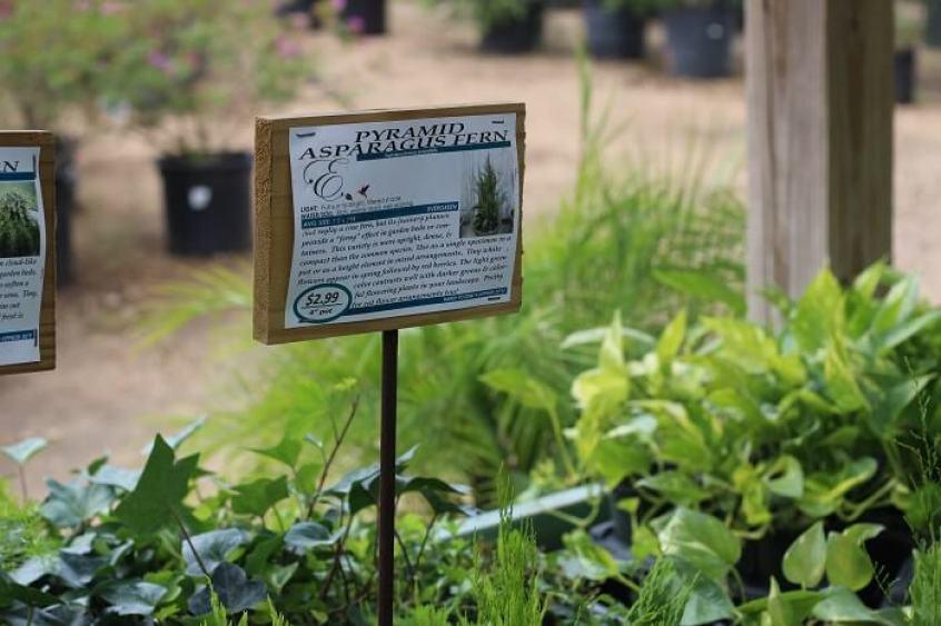 garden-terrarium-diy