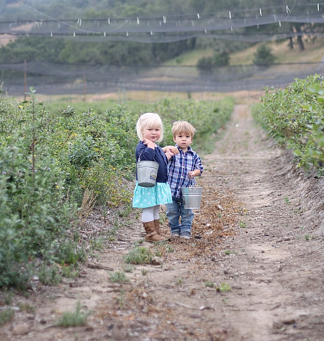 Holding hands in the blueberry fields