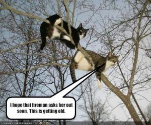 Cat-firemen picture