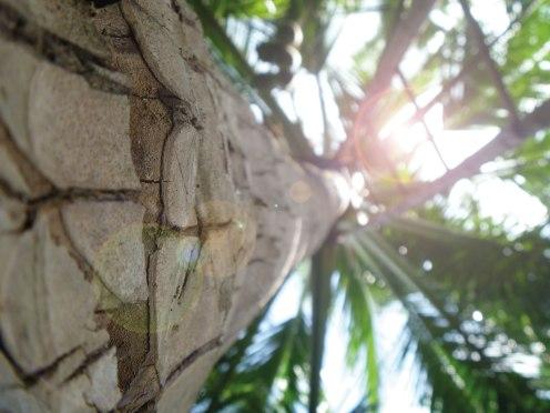 Tropicai_Kokospalme-von-unten_mit-Blendeffekt_rgb