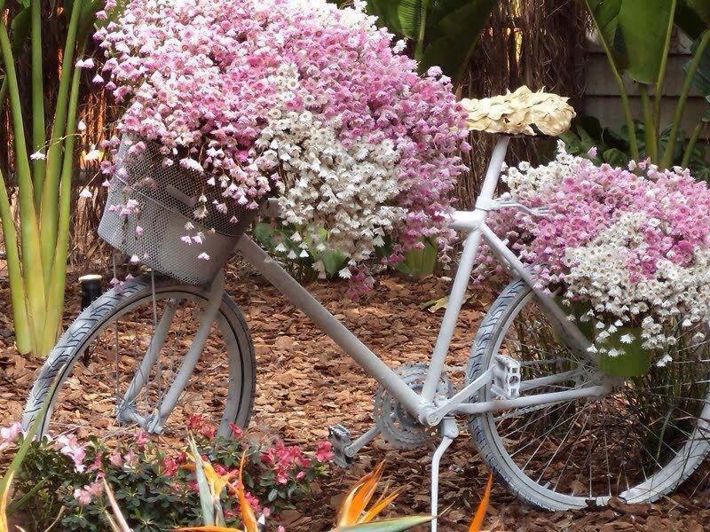 bici delirio de amor