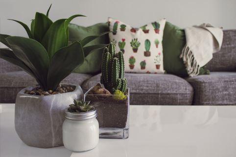 living room indoor cactus
