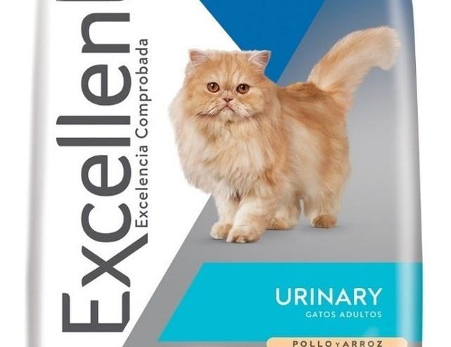 excelent-gato