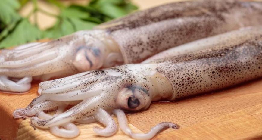 calamar-02-Dick-Fisk-Compra-y-Venta-Argentina