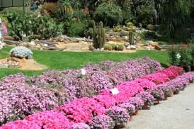 deserto - orto botanico Napoli 4