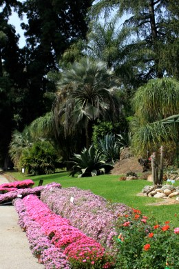 deserto orto botanico Napoli 6