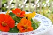 insalata di fiori di nasturzio - 7