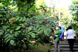 mahonia orto botanico napoli