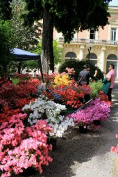 planta 2013 orto botanico Napoli 3