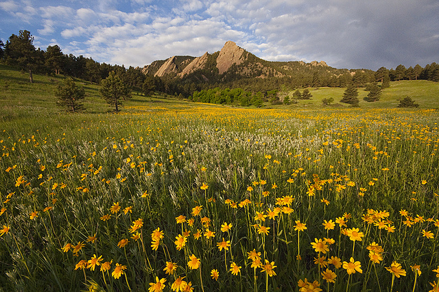 Chautauqua Wildflowers