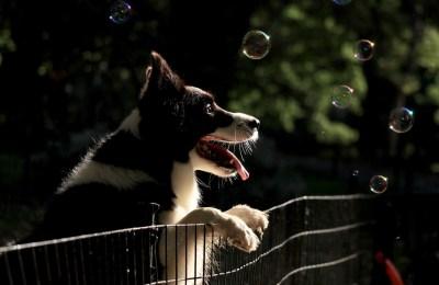 Neue Hundefreilauffläche