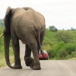 Elephant walks away