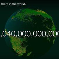 Wieviele Bäume gibt es auf der Erde?