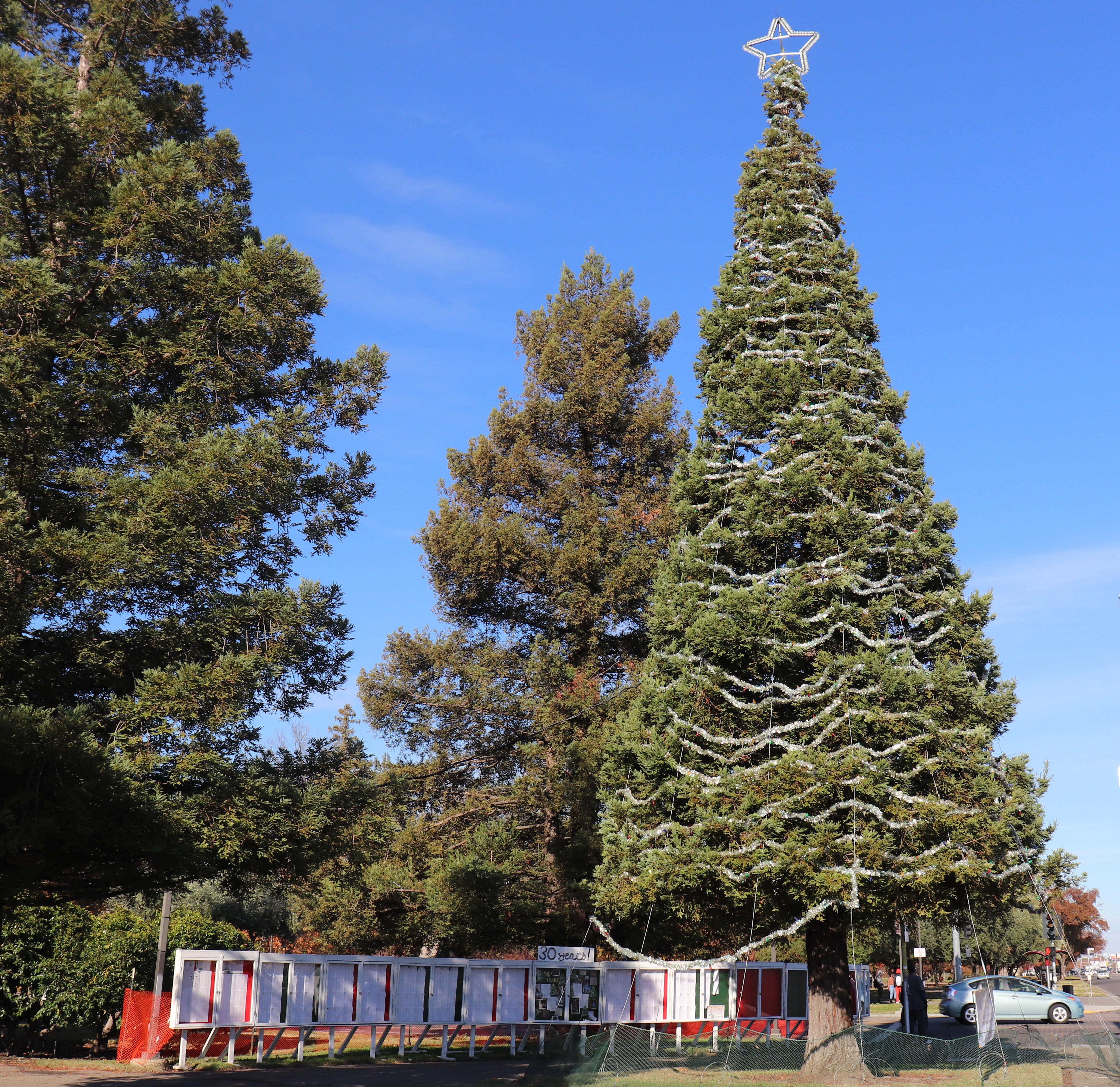 Tree of Lights 3