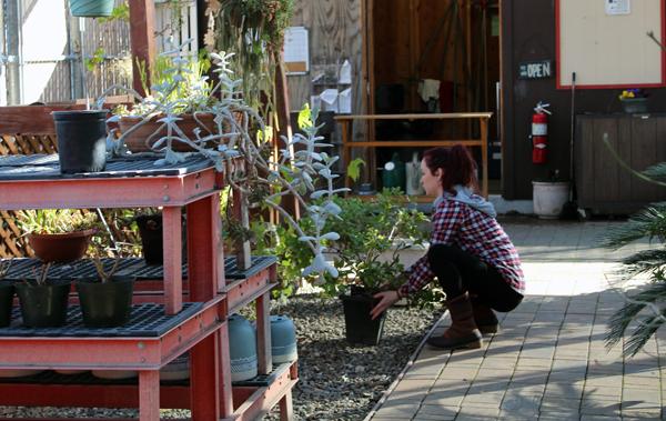 Kaci Hurst rearranging plants for the plant sale. Photo by Catlan Nguyen