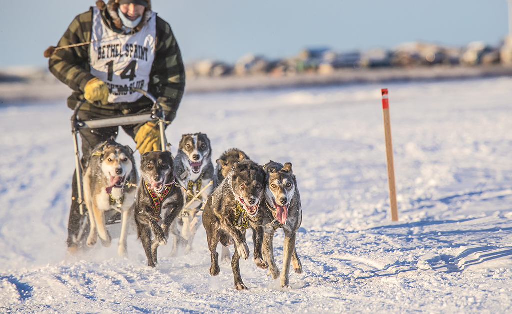 Sprint Mushing