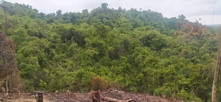 စစ်အုပ်စုကပုသိမ်-ချောင်းသာကားလမ်းဘေးတောတွေကို နေ့စဥ်ရှာဖွေရေးလုပ်နေ