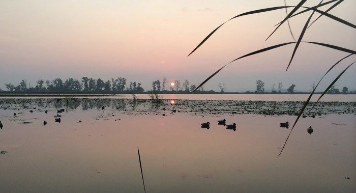 how-to-get-kicked-out-of-a-duck-blind