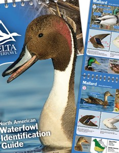 also waterfowl identification guide delta rh deltawaterfowl