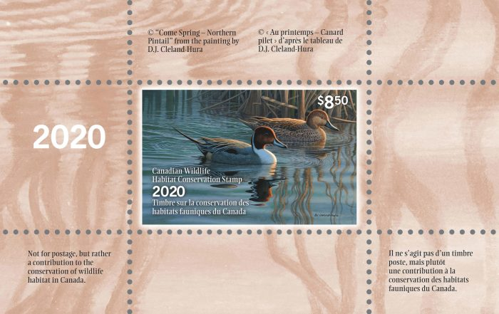 Canadian Duck Stamp 2020