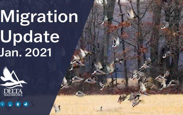 migration update