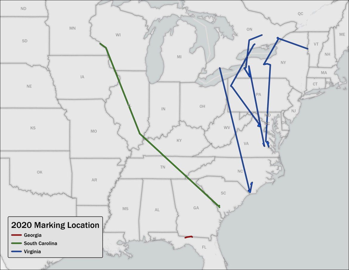 ringneck tracking map march 2021