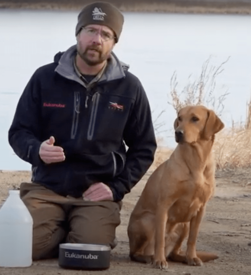 duck dog tip of the week water