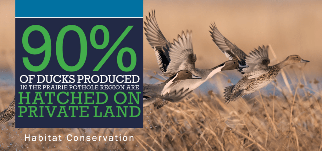 90% of ducks produced in the prairie pothole region are hatched on private land