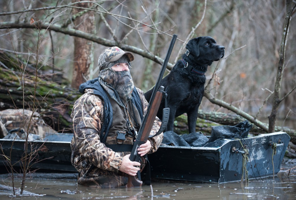 hunter and retriever timber hunting ducks in flooded forest environment. The black lab is in the boat and the hunter is quietly watching for ducks.