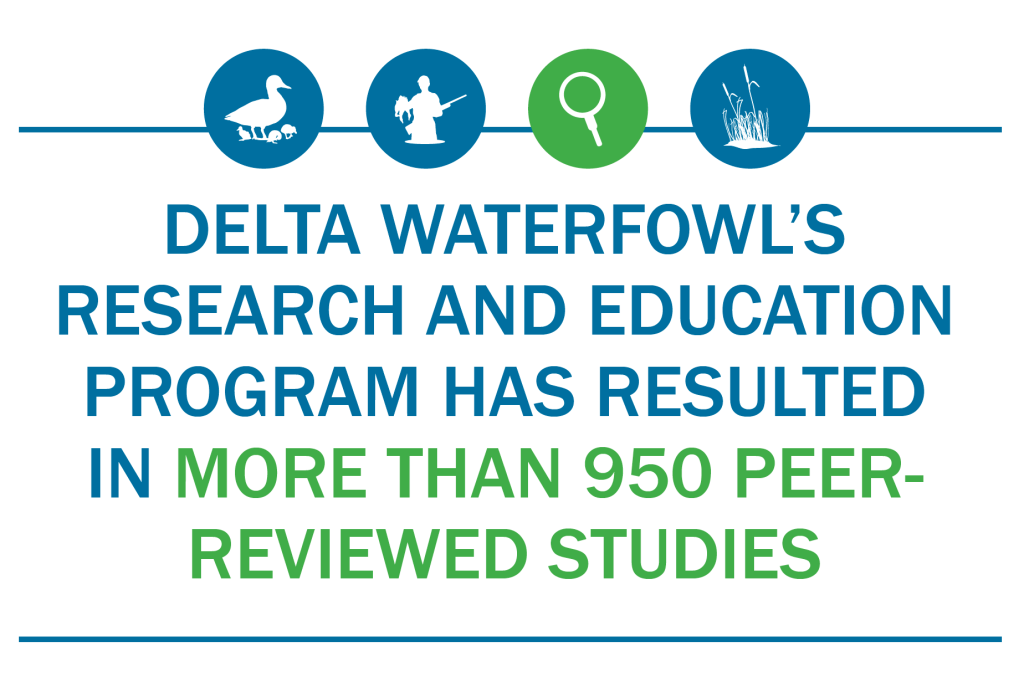 delta waterfowl's research and education program has resulted in more than 950 peer-reviewed studies