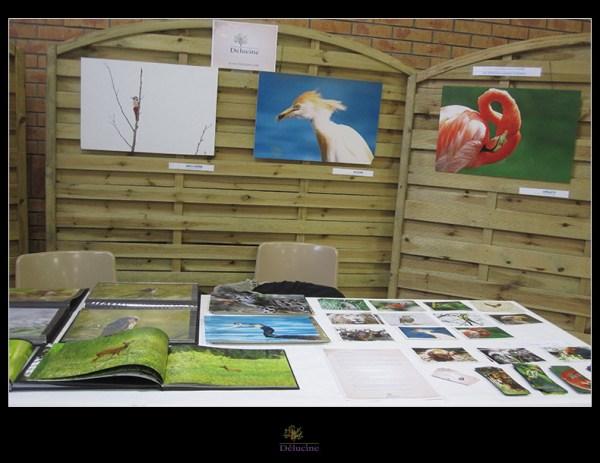 """Exposition """"30ème Festival de l'Oiseau"""" à Arques"""